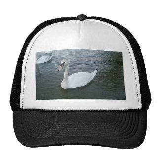 Cisnes blancos gorra