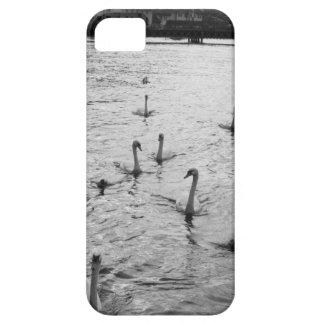 Cisnes blancos y negros iPhone 5 Case-Mate cárcasa