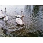 Cisnes de los pájaros de Danubio Esculturas Fotograficas