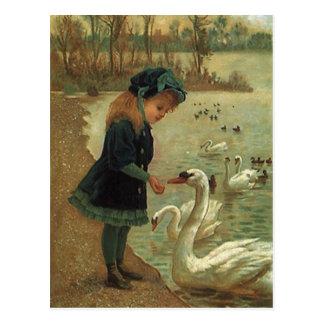 Cisnes de trompetista de alimentación del tarjeta postal
