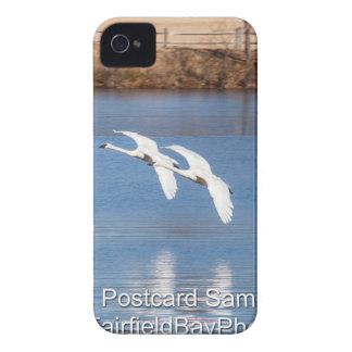 Cisnes de trompetista de Arkansas Case-Mate iPhone 4 Coberturas
