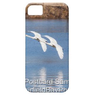 Cisnes de trompetista de Arkansas Funda Para iPhone 5 Barely There