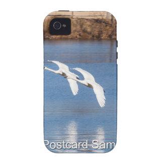 Cisnes de trompetista de Arkansas iPhone 4 Carcasa