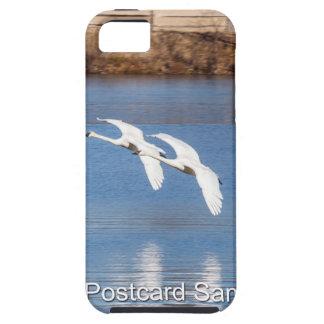 Cisnes de trompetista de Arkansas iPhone 5 Fundas
