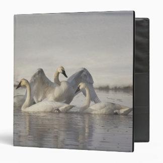 """Cisnes de trompetista en el río de Madison en Carpeta 1 1/2"""""""