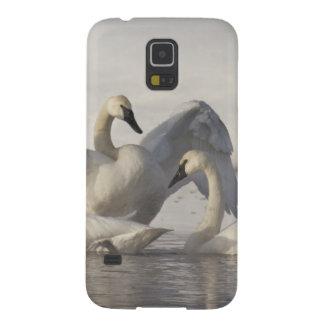 Cisnes de trompetista en el río de Madison en Funda Galaxy S5