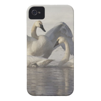 Cisnes de trompetista en el río de Madison en Funda Para iPhone 4 De Case-Mate