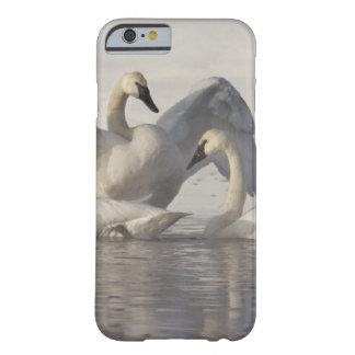 Cisnes de trompetista en el río de Madison en Funda Para iPhone 6 Barely There