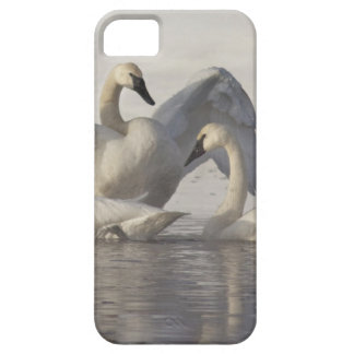 Cisnes de trompetista en el río de Madison en Funda Para iPhone SE/5/5s