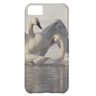 Cisnes de trompetista en el río de Madison en invi Carcasa Para iPhone 5C