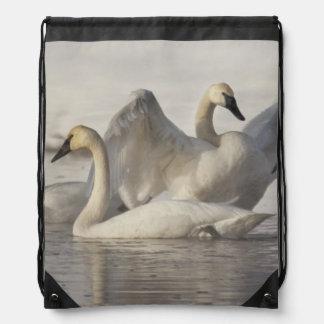Cisnes de trompetista en el río de Madison en invi Mochila