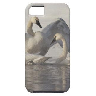 Cisnes de trompetista en el río de Madison en iPhone 5 Funda