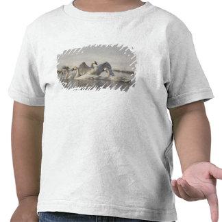 Cisnes de trompetista en el río de Madison en Camiseta