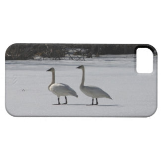 Cisnes de trompetista Nevado Funda Para iPhone SE/5/5s