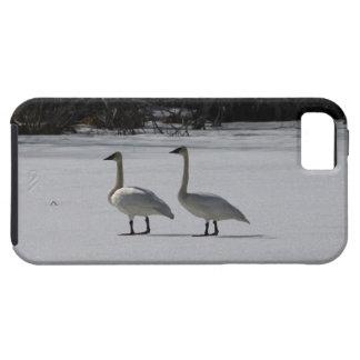 Cisnes de trompetista Nevado iPhone 5 Carcasa