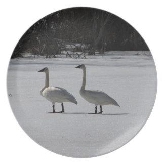 Cisnes de trompetista Nevado Platos Para Fiestas