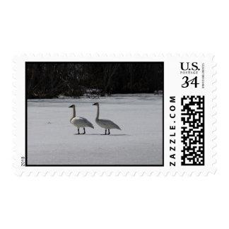 Cisnes de trompetista Nevado Timbres Postales
