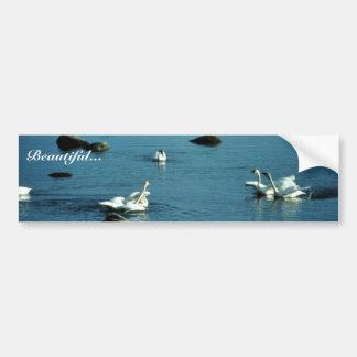 Cisnes de tundra en el agua pegatina para auto
