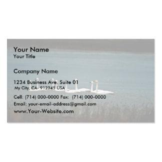 Cisnes de tundra tarjetas de visita