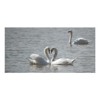 Cisnes en amor tarjeta personal con foto
