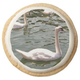 Cisnes en el agua