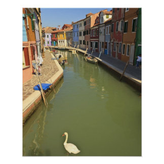 Cisnes en el canal, isla de Burano, Venecia, Itali Póster