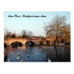 Cisnes en el río Avon, Stratford-sobre-Avon Postales