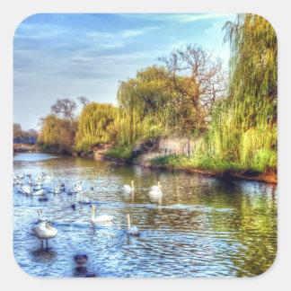 Cisnes en el río Nene HDR Colcomanias Cuadradas Personalizadas