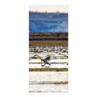 Cisnes en Klamath Tarjetas Publicitarias Personalizadas