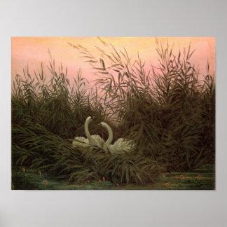 Cisnes en las cañas, c.1820 póster