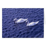 Cisnes en un lago tarjeta