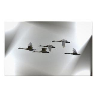 Cisnes en vuelo fotos