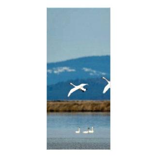 Cisnes en vuelo plantillas de lonas