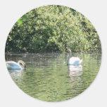 Cisnes Etiquetas Redondas