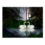 Cisnes hermosos 1 postales