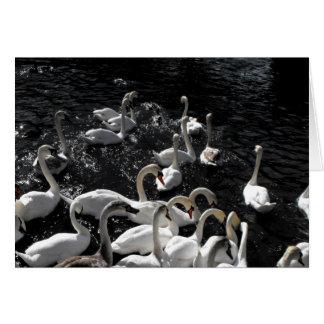 Cisnes lejos tarjeta de felicitación