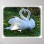 Cisnes mudos 9Y098D-012 Impresiones
