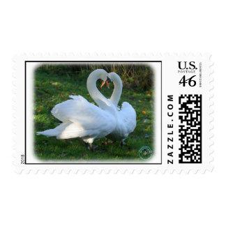 Cisnes mudos 9Y098D-012