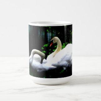 Cisnes mudos blancos taza