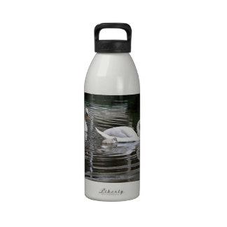 Cisnes mudos con los polluelos en el agua botellas de agua reutilizables