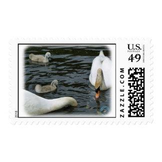 Cisnes mudos y pollos del cisne 9R054D-118