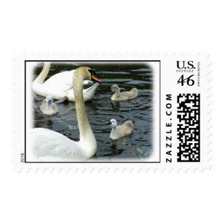 Cisnes mudos y pollos del cisne 9R054D-120