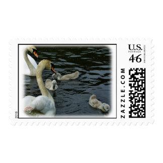 Cisnes mudos y pollos del cisne 9R054D-121