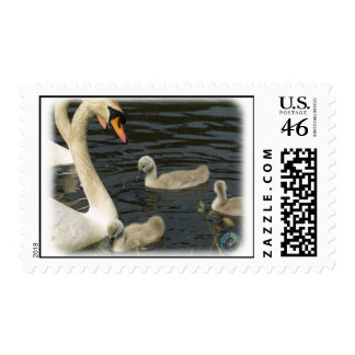 Cisnes mudos y pollos del cisne 9R054D-124
