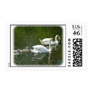 Cisnes mudos y pollos del cisne 9R054D-126
