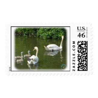 Cisnes mudos y pollos del cisne 9R054D-127