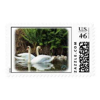 Cisnes mudos y pollos del cisne 9R054D-149