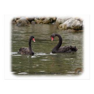 Cisnes negros 9Y353D-021 Postal