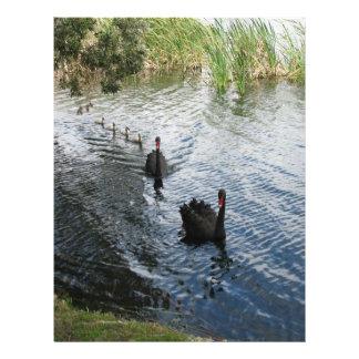 "Cisnes negros, Perth Folleto 8.5"" X 11"""
