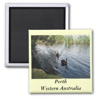 Cisnes negros, Perth Imán Cuadrado